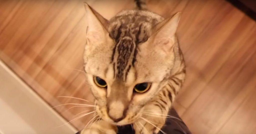 いつもは眠っている時間に起きてきて何かを訴える猫。付いていくと、仲間を助けるためだった^^ 「本当に優しい子」などの声