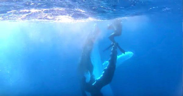 ザトウクジラが、ダイバーとハイタッチを決める美しい映像が撮影され話題に!