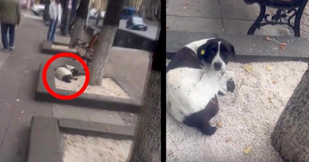 3年間行方不明だった愛犬と路上で再会!はじめはキョトンとしていた犬。しかし名前を呼んだ瞬間の反応に涙
