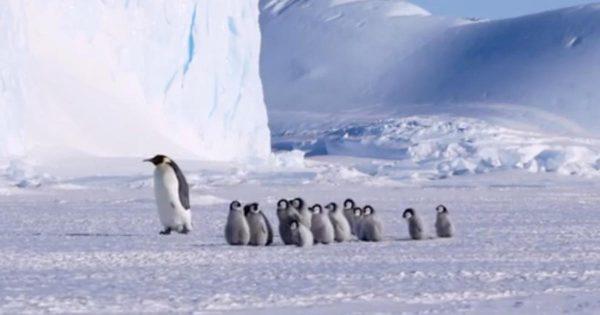 両親が漁に出ている間、子供たちを預かる「ペンギン保育園」に癒される^^