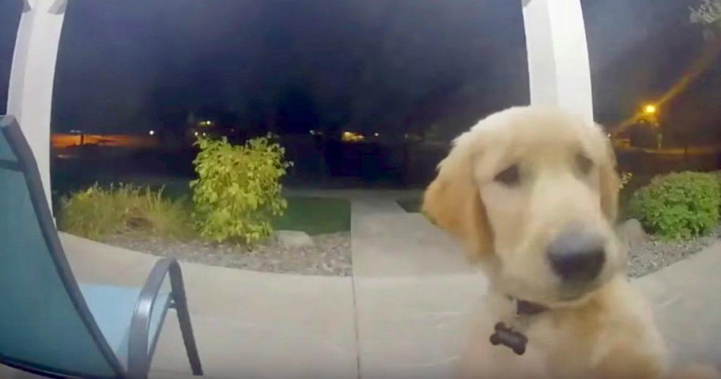 家から脱走してしまった子犬。その後、戻ってきた子犬の行動が人間にしか思えないと話題に!