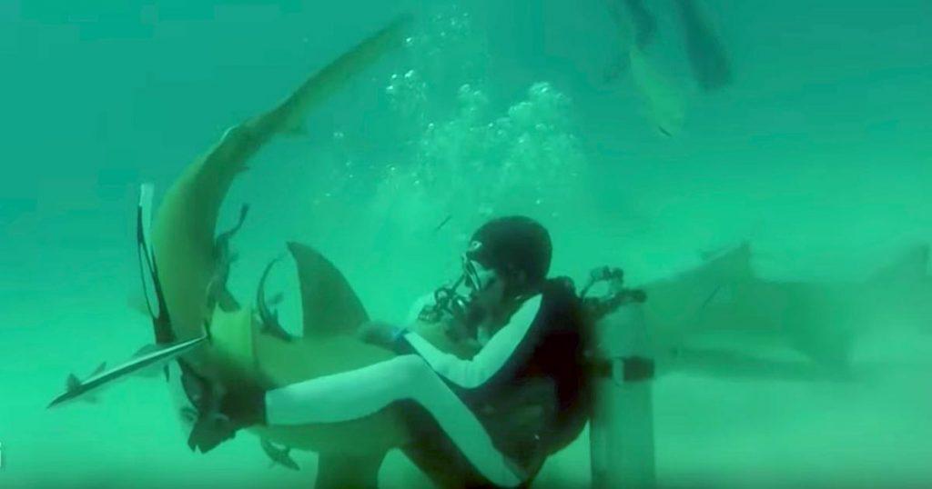 暴れるサメに抱きつき、口の中に手を突っ込むダイバー。その行動の意味がわかった時、感動せずにはいられない!