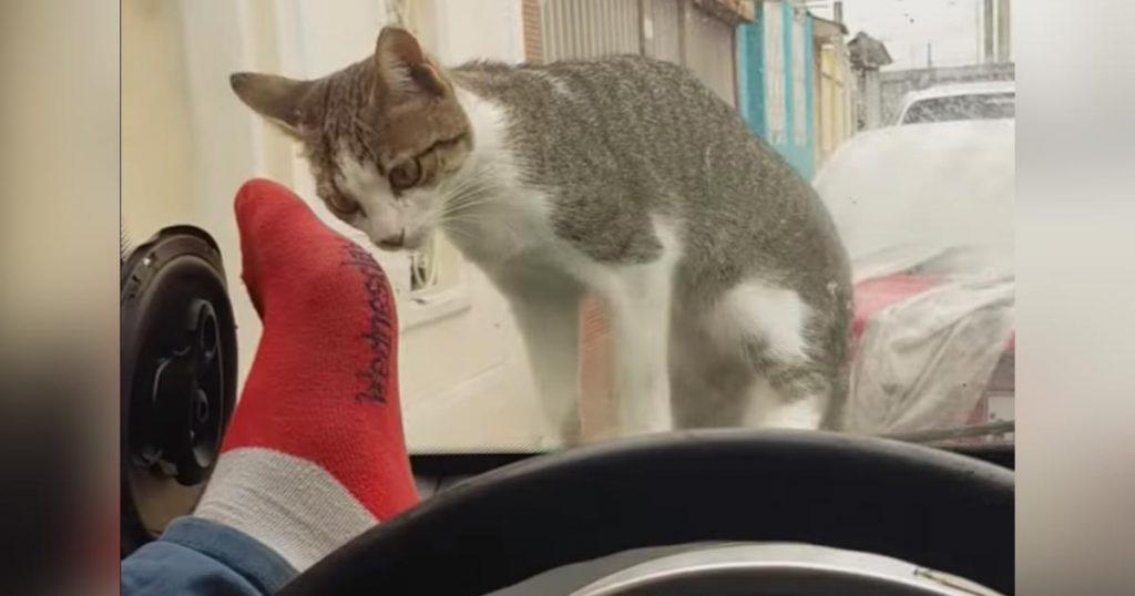 自業自得のお手本みたい。。猫を驚かそうとしたら、残念すぎることになってしまう笑