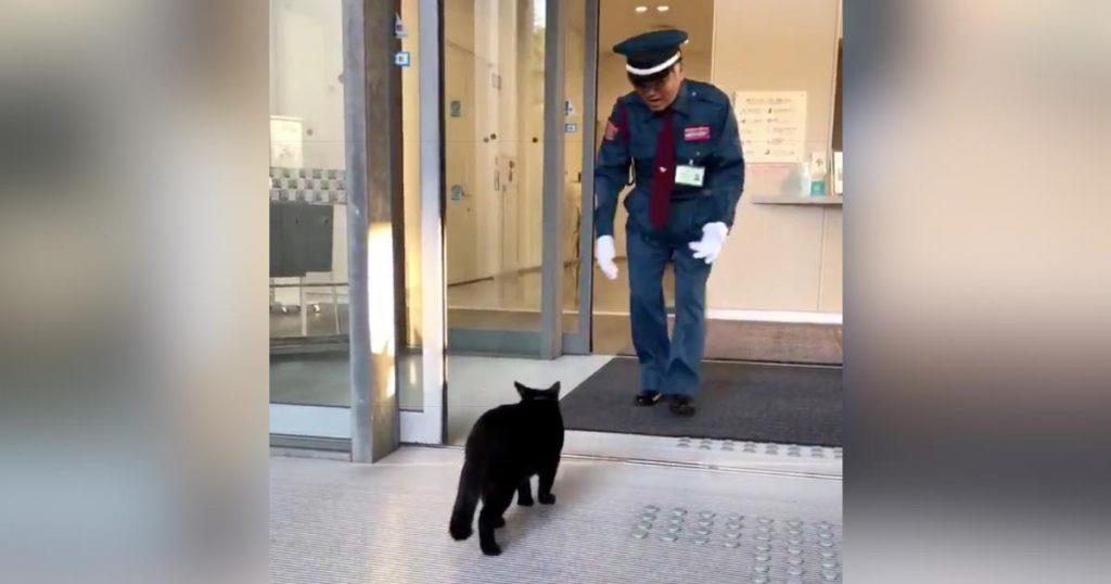 警備員さんに「入っちゃダメよ」と言われた猫の取った行動が可愛すぎると話題に^^