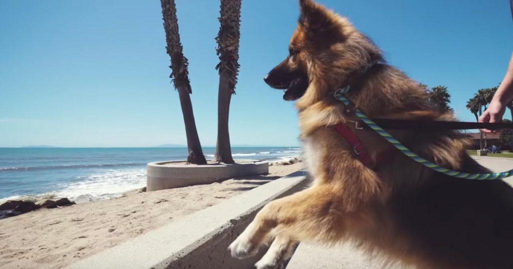 5年間鎖に繋がれたままで生きてきた犬。救助され、生まれて初めて海を見た時の反応に心打たれる