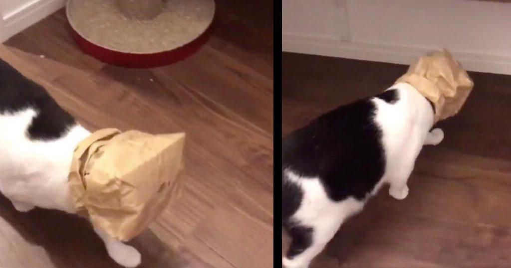紙袋が大好きすぎる猫、すっぽり頭にハメたまま生活しようとする姿が可愛いすぎると話題に!「脱がせても、すぐ首つっこんでかぶる」