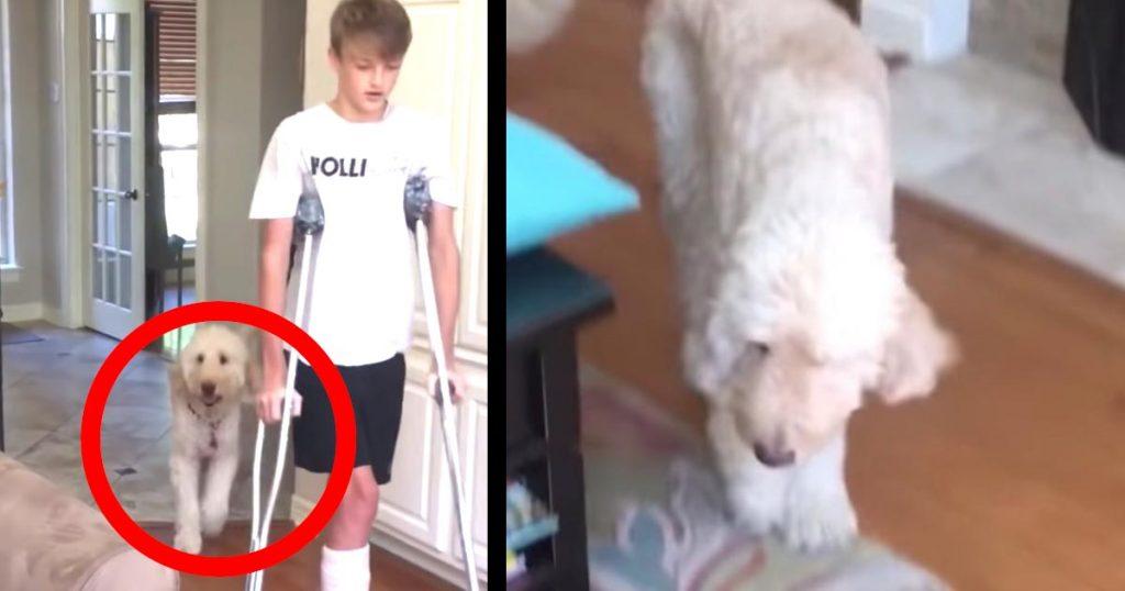 松葉づえの少年の歩き方をマネして、変な歩き方をする犬が可愛すぎる!