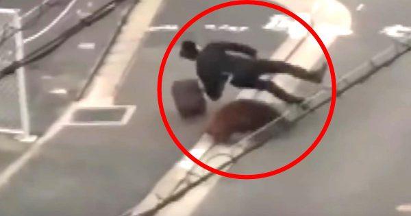体長1メートルのイノシシが突進!成人男性がこんなに軽々と突き飛ばされてしまうとは驚き!