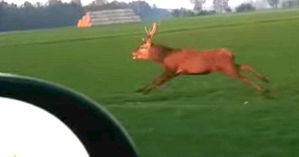 車と並走していた野生の鹿が、次の瞬間思いもよらぬ行動に!身体能力がスゴいと話題に!