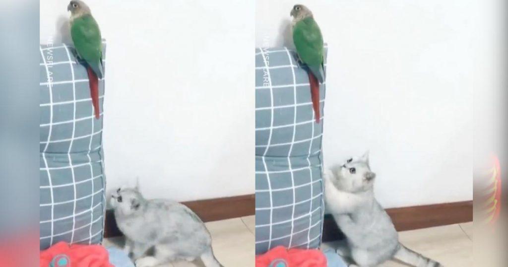 こっそり鳥にイタズラしようとした猫。しかし、途中でバレてしまい誤魔化すためにした行動が可愛すぎる笑