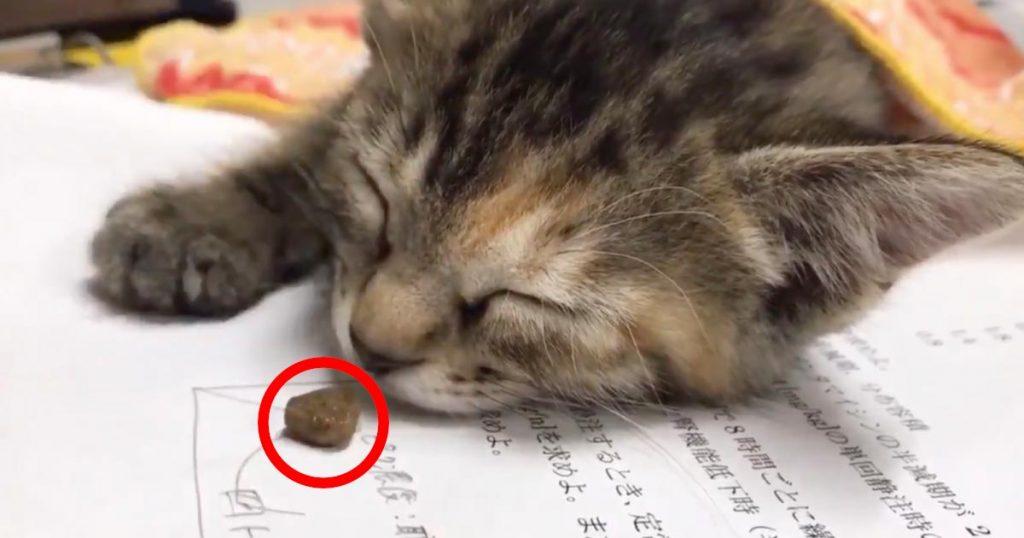 研究室の机でスヤスヤと眠っていた猫。しかし、目の前にご飯が出されると超可愛い反応をして話題に!