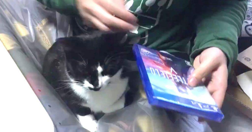 「これが猫の手を借りるというやつですか」便利な猫さんの動画が話題に!