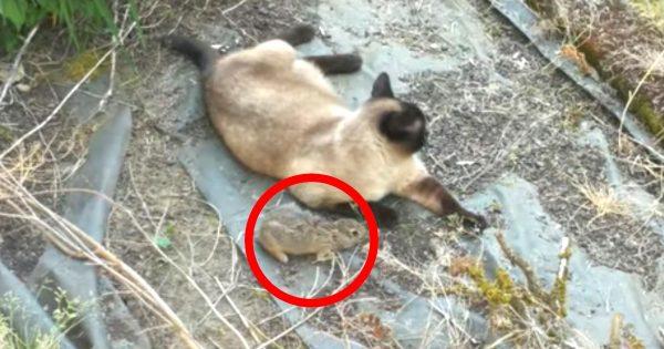猫に捕まるも「死んだフリ」でチャンスを伺い脱走成功したウサギ。しかし、その直後自然の厳しさを目の当たりにする