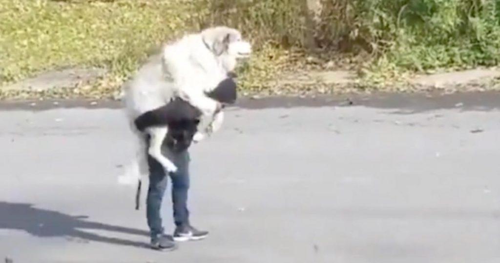 「もう歩くのヤダ!」散歩に飽きてしまった大型犬を背負う羽目になってしまった飼い主さんが話題に笑