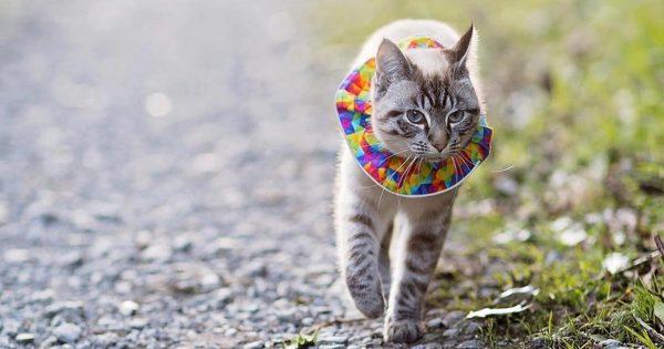 「猫が小鳥を狩ってくる。。」数え切れない小鳥の命を救った主婦の「発明」の効果がスゴい!