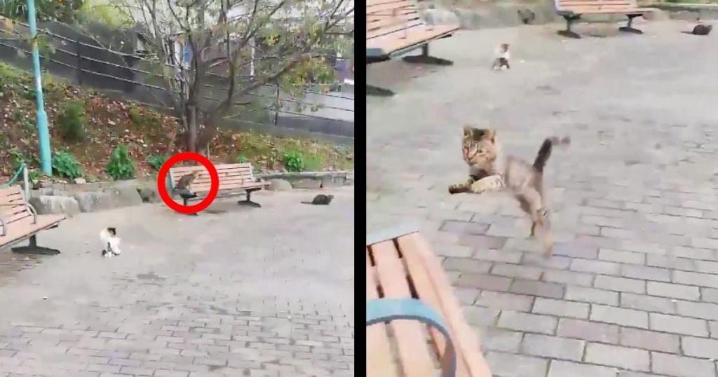 ベンチに座った途端、遠くから猛ダッシュで走ってきて、膝の上で甘える野良猫が可愛すぎる!