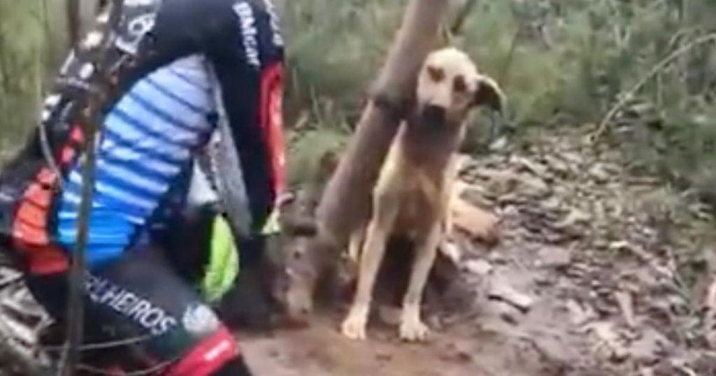 身動きの出来ないほどキツく木に縛られていた犬を救助。最初は怯えていたものの、最後は「ありがとう」と心を許してくれた!