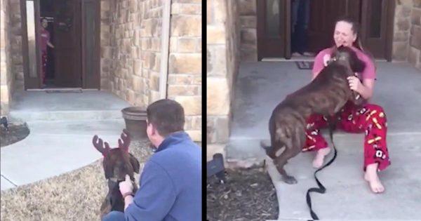 【感動サプライズ】両親に犬を飼う許可が貰えず「家族が決まった」と聞き落ち込んでいた女の子。しかし実は両親は犬を迎える手続きをしていた!
