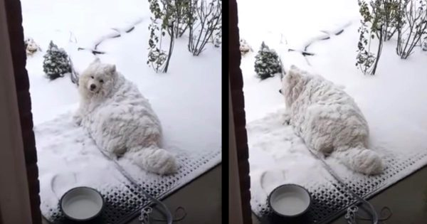 雪まみれなのに、いくら呼んでも頑なに部屋に戻ろうとしない犬が可愛すぎると話題に!