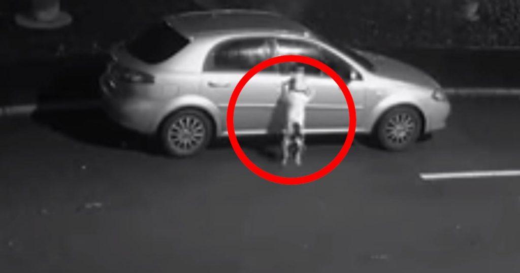 「なんで乗せてくれないの?」捨てられたことに気付かず、無邪気に車に戻ろうとする犬の姿に物議!