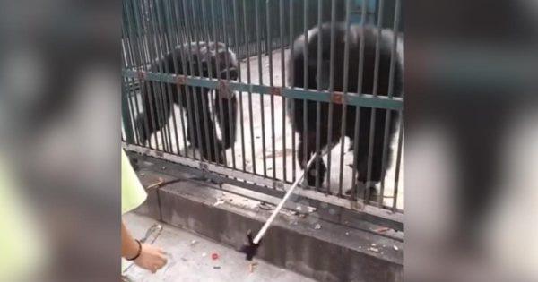 小さな女の子の自撮り棒を奪って挑発するチンパンジー。しかし、隣にいた仲間が礼儀正しい行動に出て話題に!