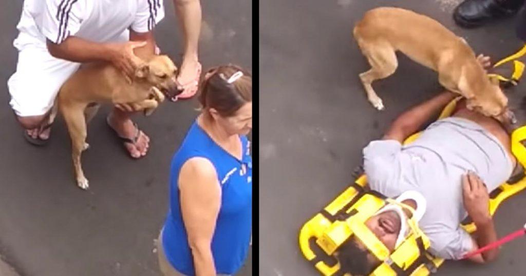 救急車に運ばれる飼い主さん。制止を振り切り駆け寄った犬の愛に溢れる行動が話題に!