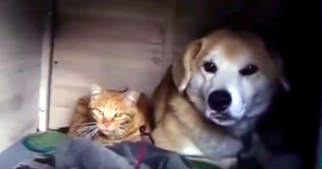 ある日犬小屋の中を見たら、一匹の野良猫が住みついていた!その後の幸せな展開に感動!