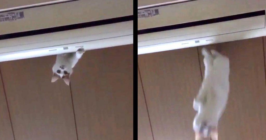 エアコンの上にいた猫がジャンプ!「人クッション」になってしまった妹さんの反応に爆笑したと話題に!