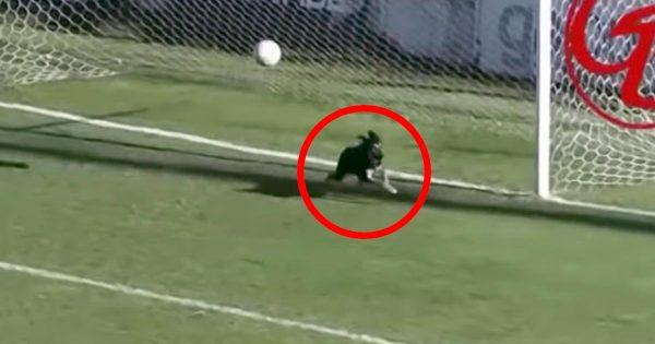 サッカーの試合で犬がナイスセーブ!シュートを放たれたチームの窮地を救い話題に!