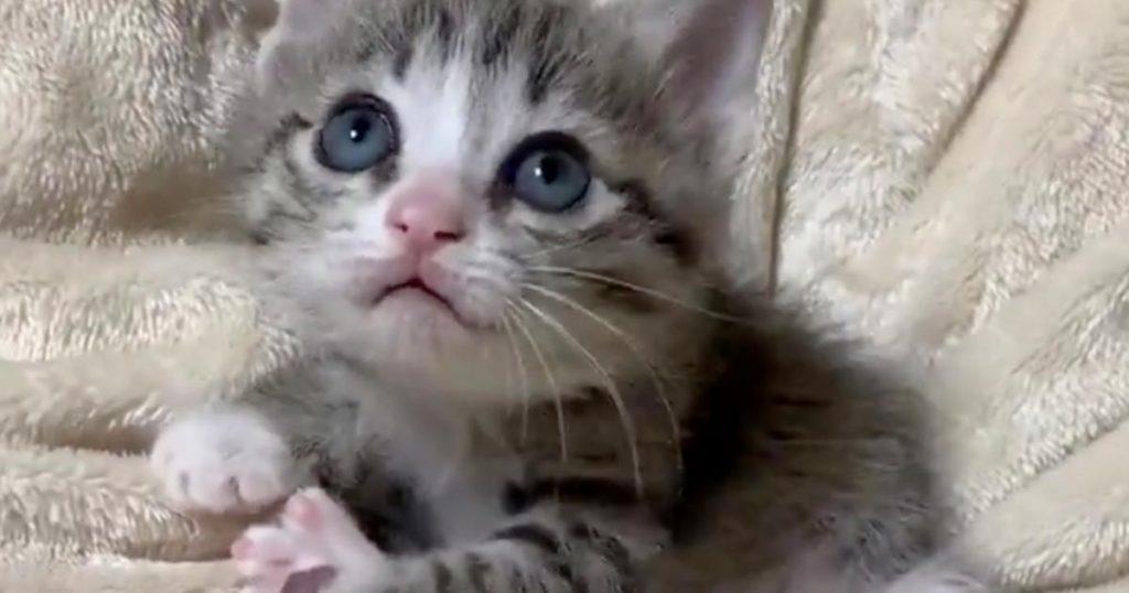 「今のなに?」上目遣いで見上げていた子猫。突然起こったハプニングへの反応が可愛すぎる!