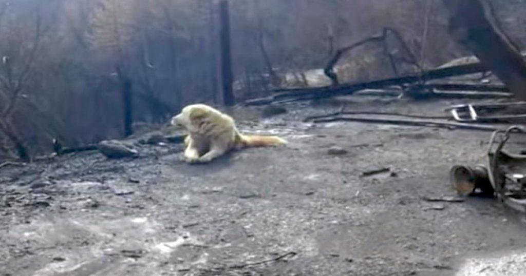 カリフォルニアの山火事で、燃え尽きた家の前で1ヶ月もの間家族を待ち続けた犬が話題に!