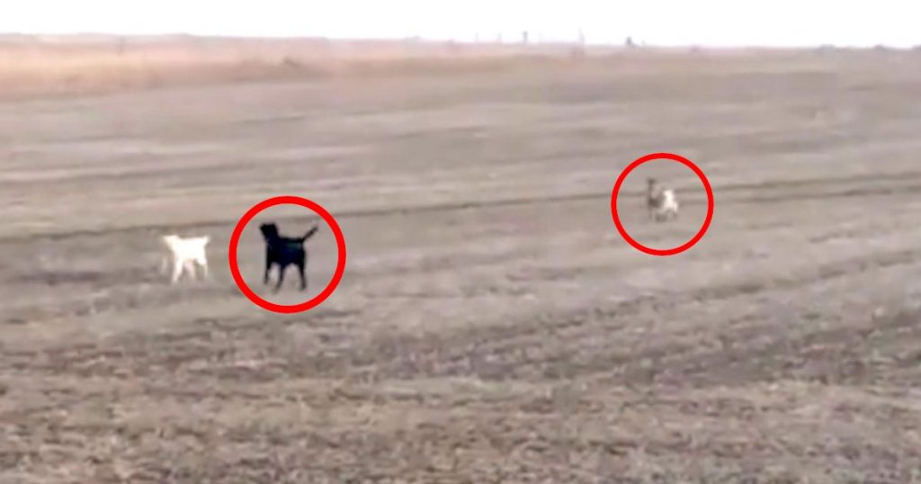 行方不明だった犬が畑で走っているのを発見!近づいてきたと思ったら、犬と異種の仲間が増えていたと話題に!