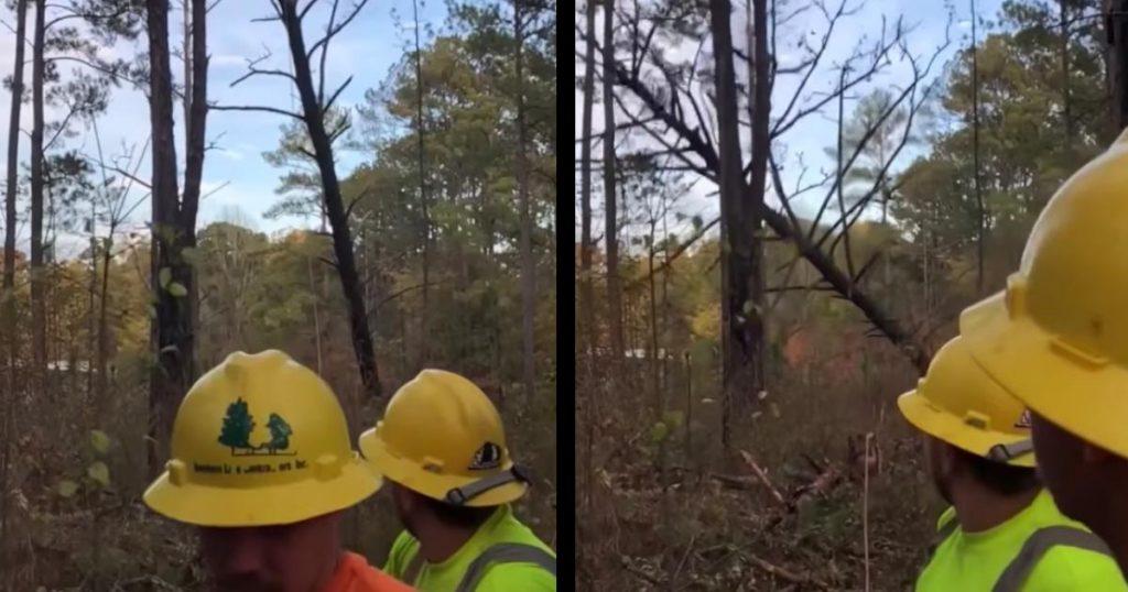 遠くで倒れた枯木。木の届かない離れた所にいたのに、思いもよらぬ危ない目に遭ってしまう動画が話題に!