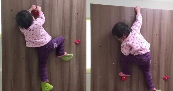 【日本】垂直ハイハイ!ボルダリングでテクニックを使ってスイスイと登っていってしまう2歳の女の子が凄いと話題に!