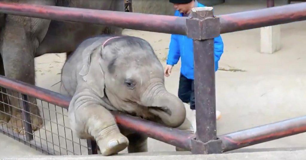 飼育員さんに怒られてスネた小ゾウのリアクションが可愛すぎると話題に!「人入ってるのかと思った」の声