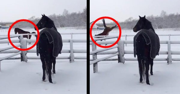 「え?あいつ、、うそやん、、」雪でテンションMAXだった引退名馬。しかし、仲間が盛大にすっ転んだのを見た時の反応が面白いと話題に笑