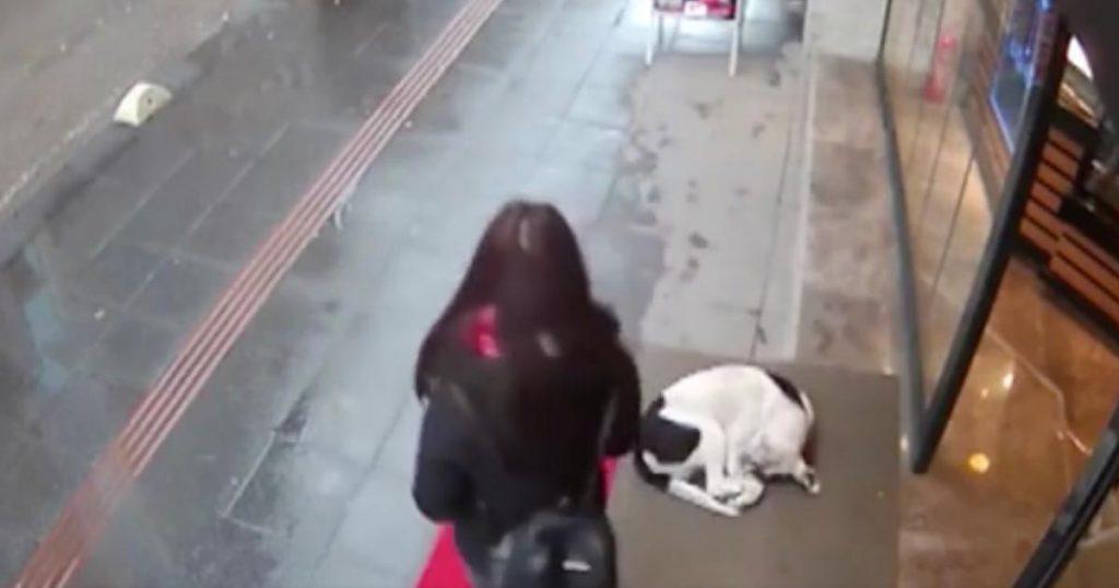 冷たい雨の中、路上で震える野良犬。気づいた女性の美しい行動が防犯カメラに映り「人類の心は死んでいない」と話題に!