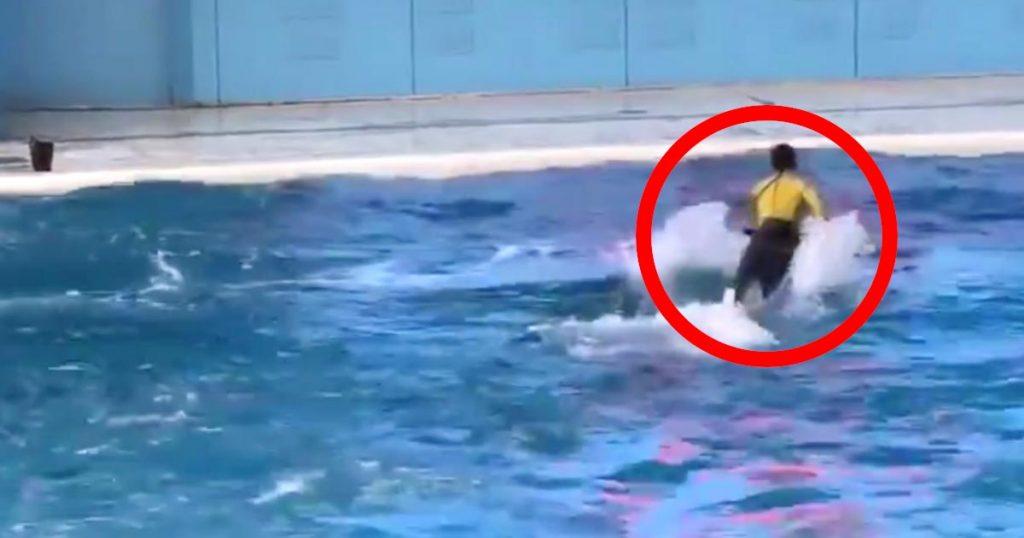 イルカショーでトレーナーの男性に起きたハプニングが「元気のない時に見ると頑張れる」と話題に!