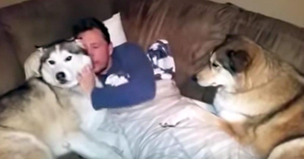 左のハスキー犬を撫でていた飼い主さん。すると、嫉妬した右のハスキー犬が構ってアピールで可愛すぎる行動に出た笑