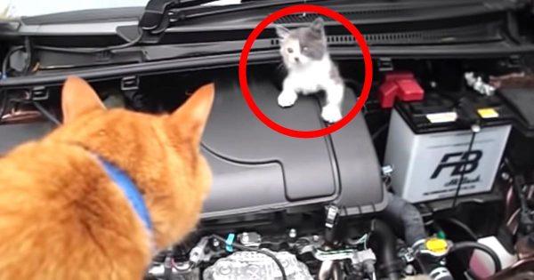 怯えてエンジンルームの奥に隠れてしまった子猫。しかし騒ぎを聞いて駆けつけた近所のおじいちゃんの飼い猫の茶トラが大活躍!