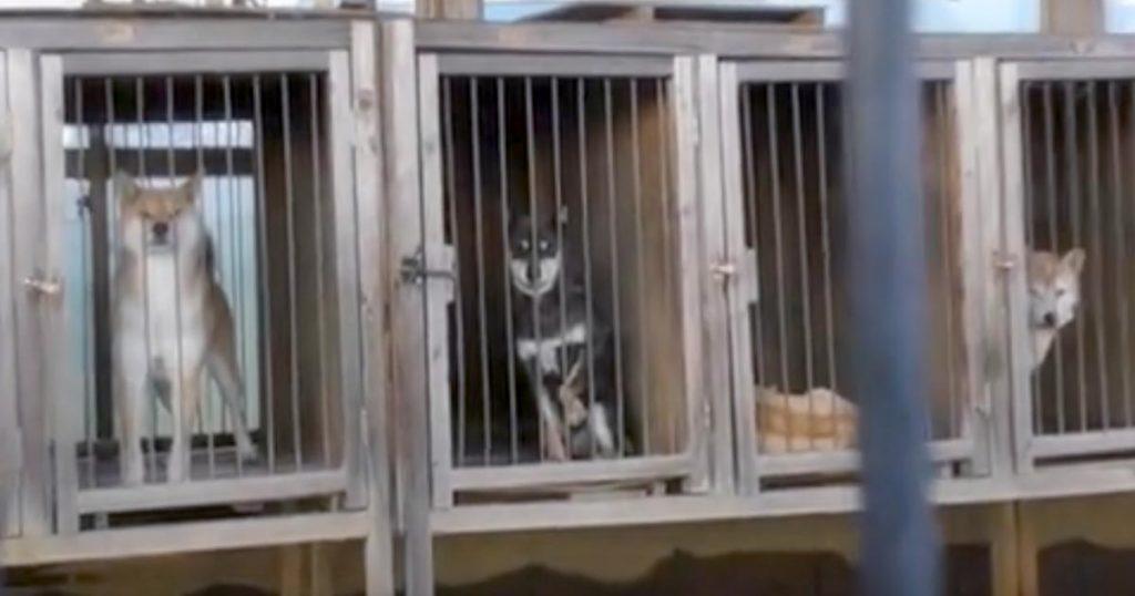 イギリスで子犬や子猫のペットショップでの販売を禁止する新法「日本でもやるべき」「日本も続こう」の声