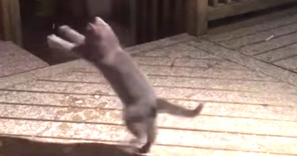 雪を捕まえようとしてテンションMAXの猫が可愛すぎると話題に!