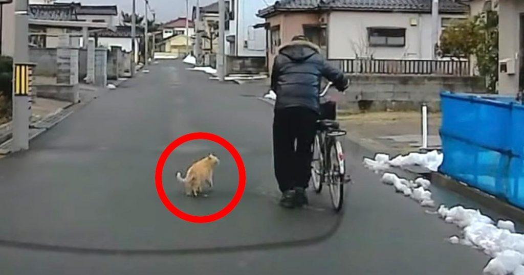 「じいちゃん、車来てるよ!」おじいさんに車が来たことを教えようとする、賢く優しい猫が目撃される!