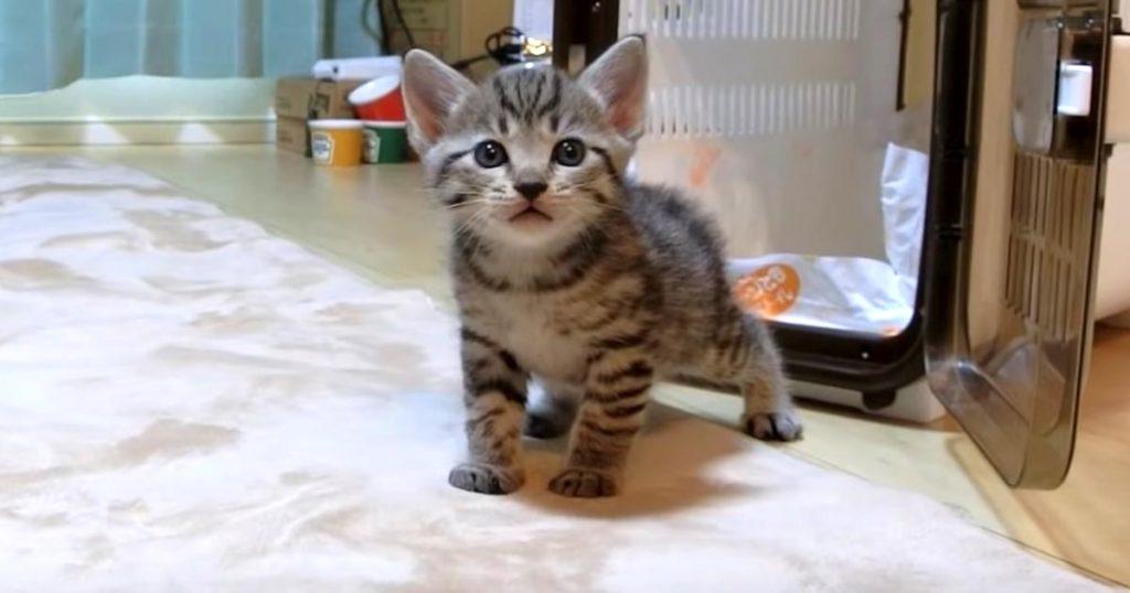 「ここはどこ?」子猫が初めて家にやって来た時の反応が可愛すぎる!