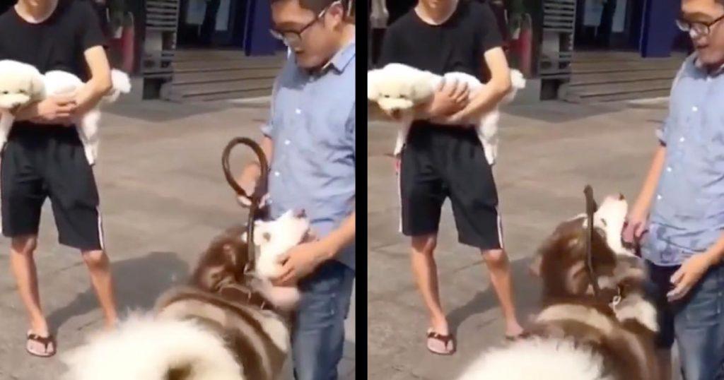 「僕もやって!」抱っこされる犬を見た大きなアラスカン・マラミュートの行動が可愛すぎる笑