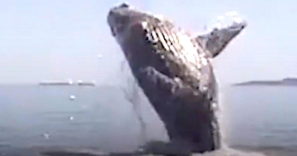 網が絡まったクジラを助けた家族。助かったクジラは「ありがとう」と何回も感謝の気持ちを伝えてきた!