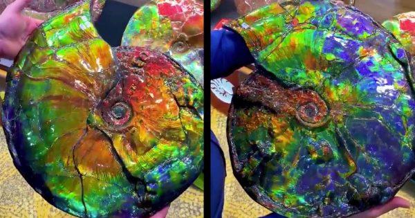 【神秘】つくり物かと思ったら本物だった!7100万年前のアンモナイトの化石の鮮やかな色彩にびっくり!