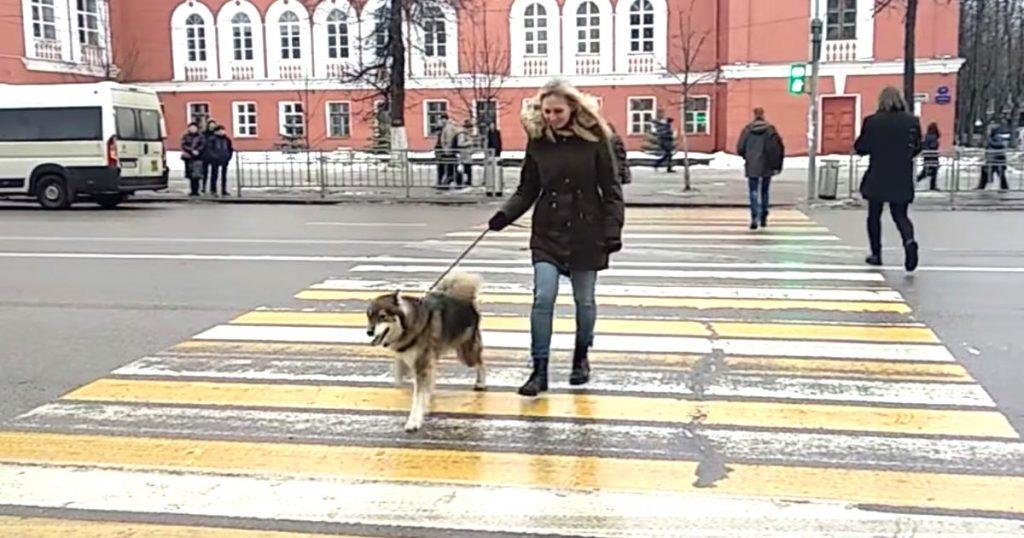 「みんなのように歩きたい」「この犬にとってはこれが普通のことなのかな」とても奇妙な歩き方で散歩するロシアの犬が話題に!