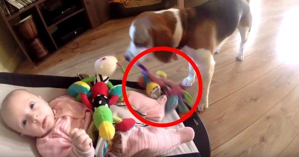 「ごめんね」赤ちゃんのおもちゃを取って大泣きさせてしまった犬。仲直りするために犬が取った思いもよらぬ行動が優しすぎる!