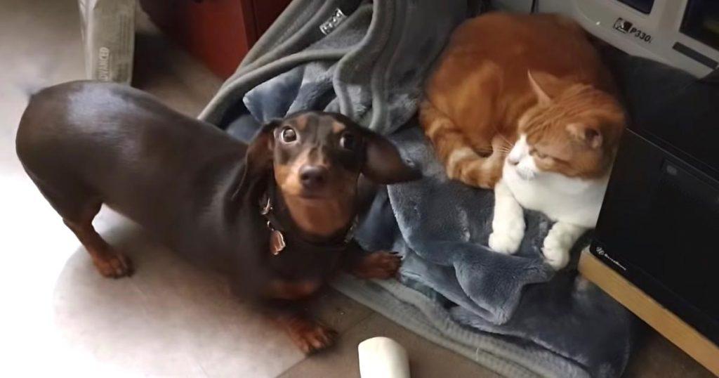 昼寝をしたい猫をどうしても外に連れ出したい犬のジェスチャーが可愛すぎると話題に笑
